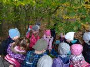 Školní rok 2017 -2018 – Ryzáček- poznáváme les